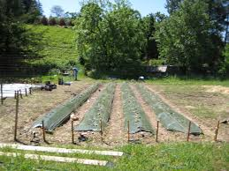 Is Renting a Farm Permissible?